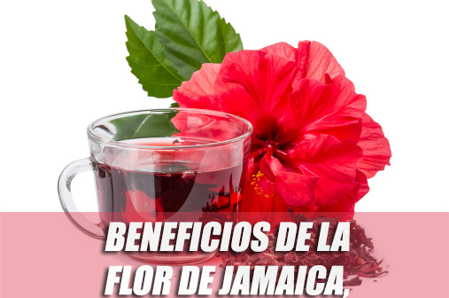 flor de jamaica saludable